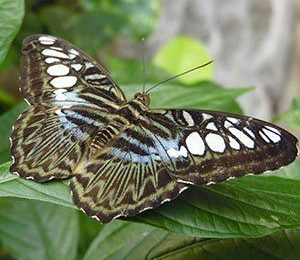 Exploring Nature in Branson: The Beauty of the Butterfly Palace