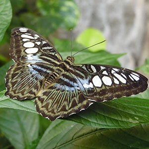 exploring-nature-in-branson-the-beauty-of-the-butterfly-palace